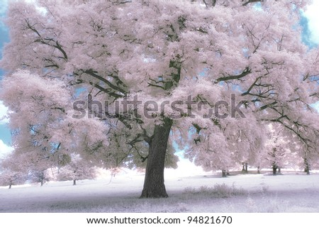 infrared landscape with oak on a summer day