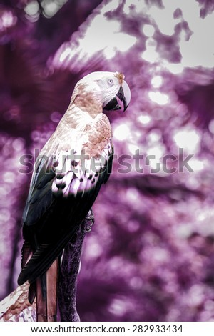 Infrared photo of cute scarlet macaw parrot - stock photo