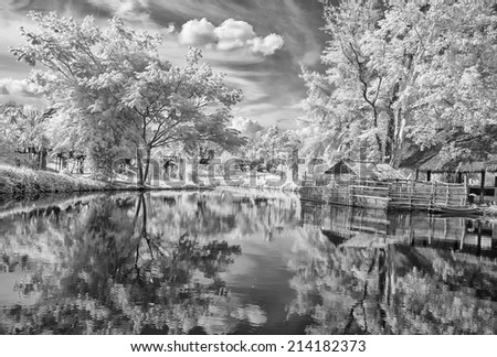 infrared photo - tree, lake and plant in parks