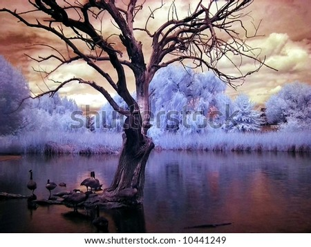 Infrared Pond - stock photo