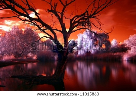 Infrared Pond - stock photo