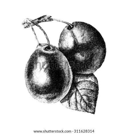 Ink hand drawn fruit sketch for kitchen and restaurant design. Vintage fruits illustration for isolated on white.  - stock photo
