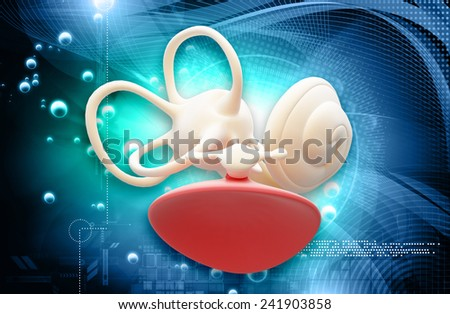 inner ear structure - stock photo