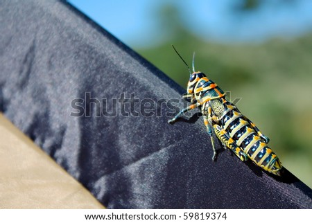 Insect - stock photo