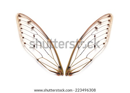 Insect cicada - stock photo