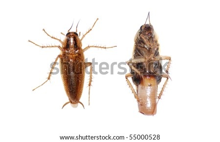insect cockroach pest bug - stock photo