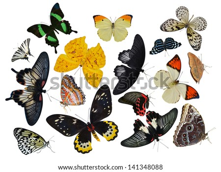 insect collection of butterflies isolated on white background - stock photo