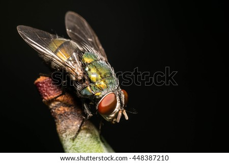 insect fly on  Black background - stock photo