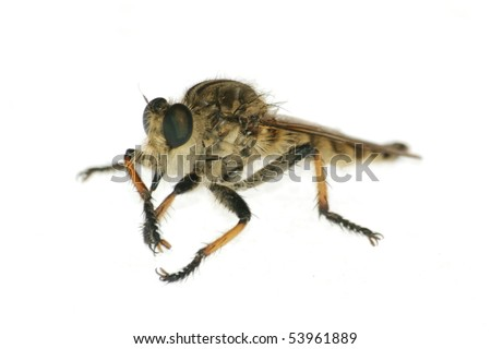 insect gad horse fly isolated in white - stock photo