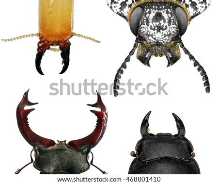 Insect heads (Termite, Jewel beetle and Stag beetles) with mandibles (insect mouthpart) isolated on a white background. Macro