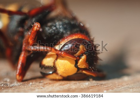 insect hornet close-up shallow depth of field - stock photo