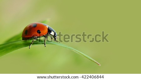 Insect ladybird on a green leaf of grass. - stock photo
