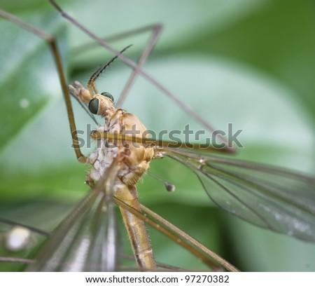 insect macro closeup - stock photo