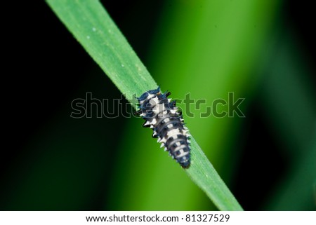 Insect macro on grass,thailand - stock photo