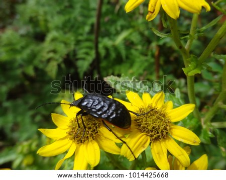 Insect on flowers