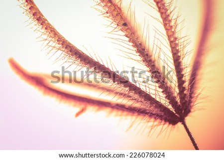 Insect on Grass flower on warm color background,naturally refreshing - stock photo