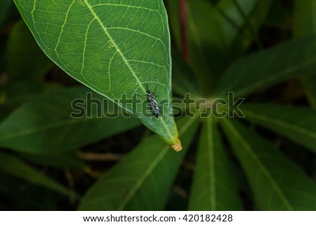 insect on  leaf - stock photo