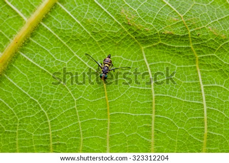 Insect on the leaf - stock photo