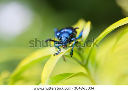 Insect on the leaf soft focus - stock photo