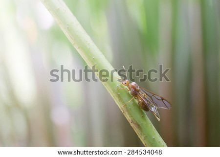 Insect on twig - stock photo