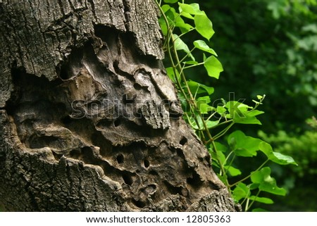 Insect relief on tree