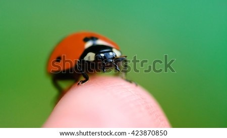 insect sat on the finger and was filmed at the macro - stock photo