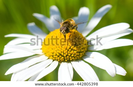 insect sitting on a flower - stock photo