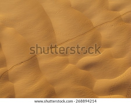 Insect trails on sand dunes, oasis of Ksar Ghilane, Tunisia. - stock photo