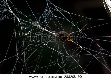 Insect was wrapped it in silk of spider scary frightening - stock photo