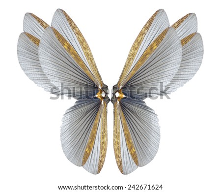 insect wings - stock photo