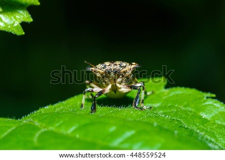 Insects. - stock photo