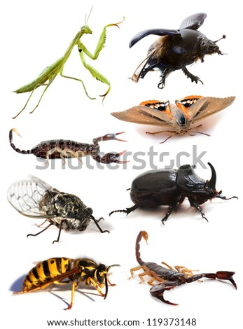 insects and scorpions in front of white background - stock photo