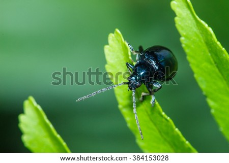 Insects, animals. - stock photo