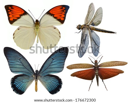 insects butterfly, dragonfly, grasshopper, dragonfly - stock photo