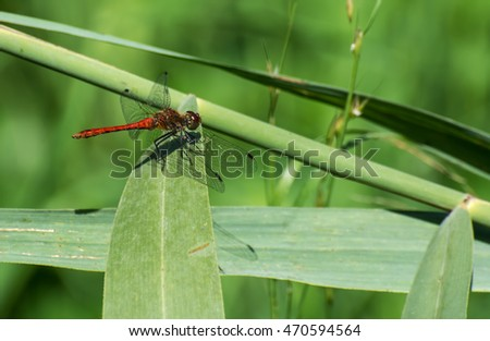 Insects.Dragonfly.