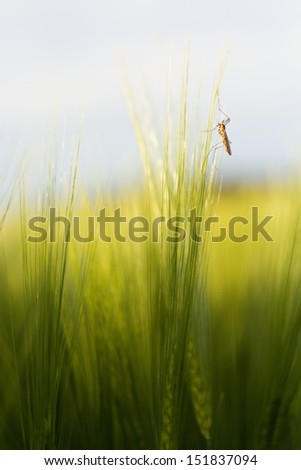 insects in the grass - stock photo