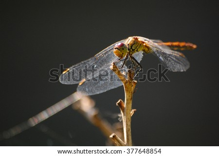 Insects in village. Insects. Dragonfly. Summer photo