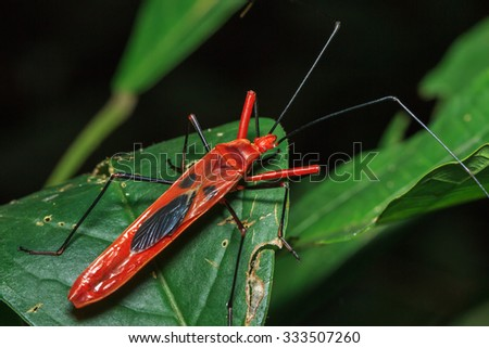 insects, insect, bug - stock photo