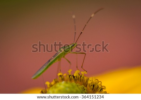Insects, insect, bug on flower & yellow leaf with colorful background