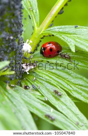 insects. ladybug. the macro - stock photo