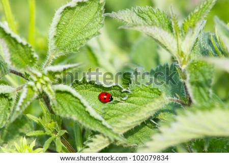 Insects on a Sheet of - stock photo