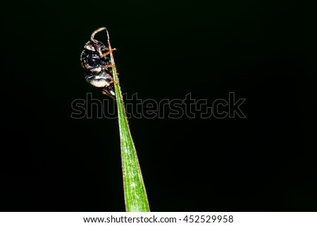 Insects on the grass isolated on black background - stock photo