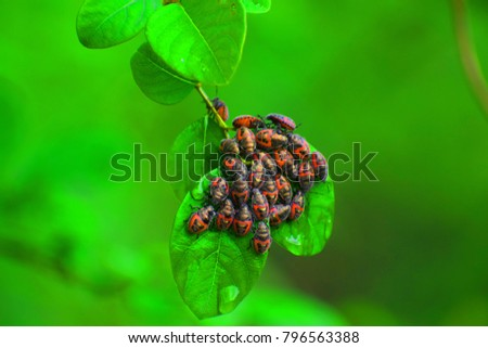 Insects on the leaf