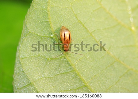 insects on the leaves in the wild