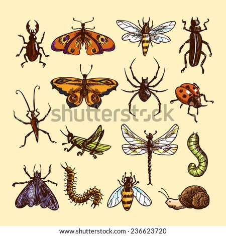 Insects sketch colored decorative icons set with ladybug caterpillar wasp isolated  illustration