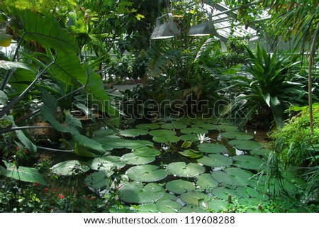 inside a greenhouse with lots of tropical plants - stock photo