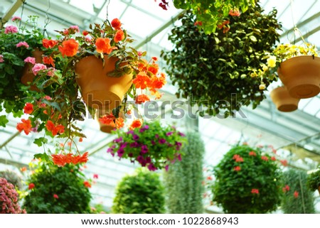 https://thumb1.shutterstock.com/display_pic_with_logo/167494286/1022868943/stock-photo-inside-garden-in-shizuoka-1022868943.jpg