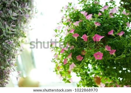 https://thumb1.shutterstock.com/display_pic_with_logo/167494286/1022868970/stock-photo-inside-garden-in-shizuoka-1022868970.jpg