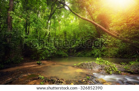 Inside in rainforest jungle with tropical plants and sun light shines through leaves and tree branches  - stock photo