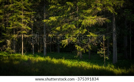 inside of a green forest - stock photo